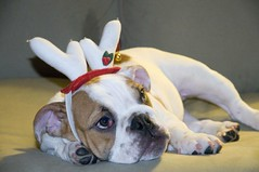 Posing with my antlers