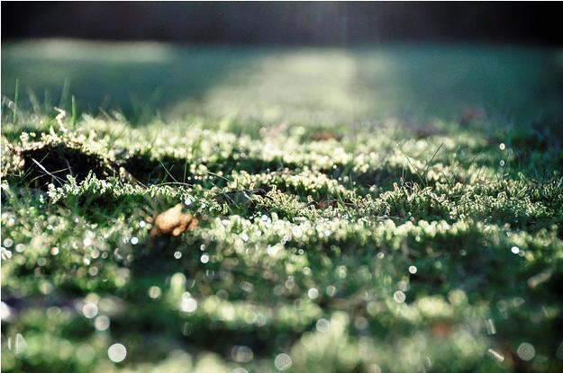 625 Mossy Grass