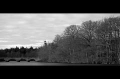 Virginia Water (Ian@Wokingham) Tags: bridge trees lake virginiawater