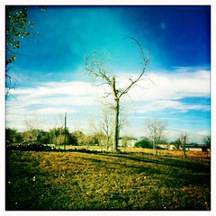 the most beautiful tree (faster panda kill kill) Tags: lookup everything takingawalk heartshaped ilovethistree mlkdepot