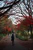 残秋の歩道