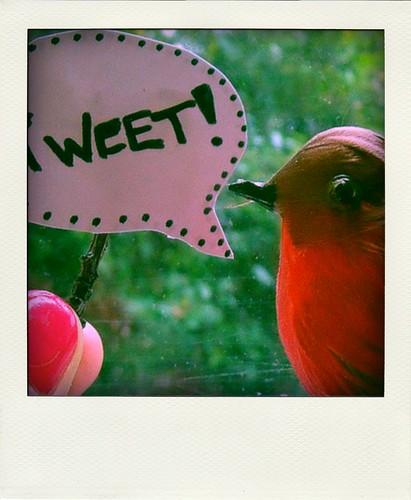 tweet-pola