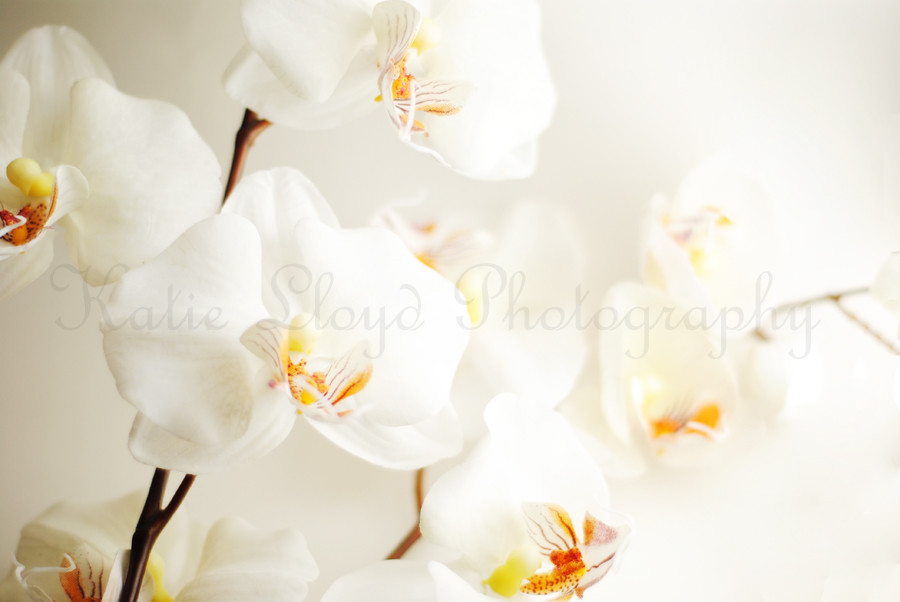 Orchids-on-White---full-fra