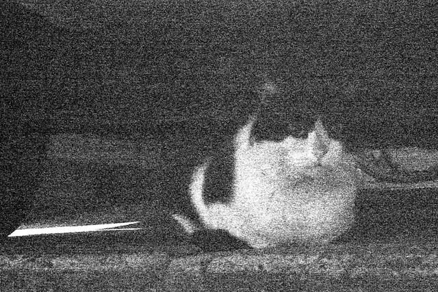 Today's Cat@2011-01-04
