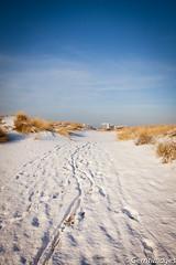 Nature in De Panne (gerritdevinck) Tags: winter snow landscape sneeuw landschap depanne westhoeknatuurreservaat