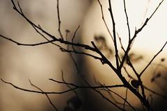 (Noelle Buske) Tags: closeups