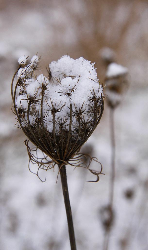 snowy qal3
