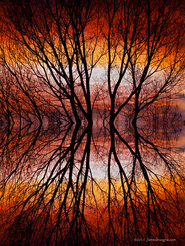 Sunset Tree Silhouette Abstract 2 by Striking Photography by Bo Insogna, on Flickr