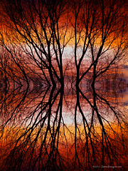 Sunset Tree Silhouette Abstract 2