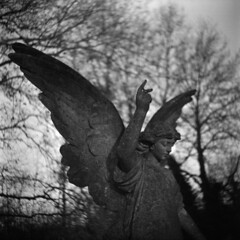 upward gesture (Skink74) Tags: uk morning trees england blackandwhite bw sculpture 120 6x6 film cemetery graveyard statue stone angel mono memorial bokeh hampshire swirl rodinal ilford hursley hp5plus agilux agifold standdeveloped filmdev:recipe=5085 agiluxagifold agiluxanastigmat75mmf45 aam002