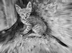 Defenseless (Ben Heine) Tags: light wallpaper portrait blackandwhite baby inspiration cute art colors monochrome animal danger cat project photography hope sadness movement eyes friend kitten scenery energy colorful exposure dof image zoom pov lumire quality air tail fear arts picture atmosphere stranger yeux sharp moustache oxygen santorini greece panic tiny license expressive series lonely scared conceptual copyrights bestfriend dynamism bb prisoner imagery ecosystem mignon chaton workflow peur radialblur luminosity postprocessing defenseless theartistery dtresse digitaltechnology creativecomposition benheine samsungimaging nx10 benheinecom