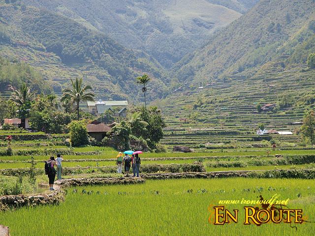 Traversing the Rice Paddies