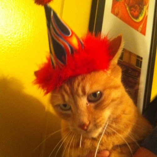 Orange Kitty was not happy