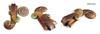 La Nascita del Vento 1 (Alkhymeia) Tags: art handmade spirals polymerclay fimo clay sculpey kato artesania cernit polymer premo bijouterie artigianato ciondolo artigianale spirali bizuteria polimerica bigiotteria arcillapolimerica pastasintetica alkhymeia arfanotti