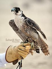 ..[   ].. ([ Sultan Al-Hajri ]) Tags: sultan  qatar qtr           alhajri    qtri  rzh