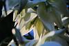 Dark Secrets (ladydipim) Tags: flower yulka
