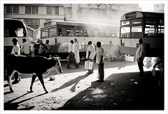 Bangalore | Late Afternoon (Suyog Gaidhani) Tags: bw india bus station cow bangalore citymarket bengaluru krmarket