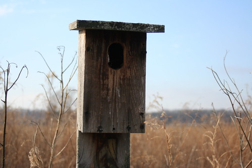 Tree Swallow House