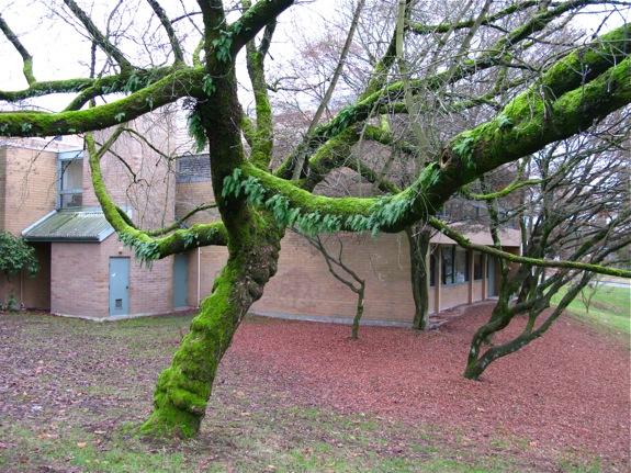 mossy fern tree