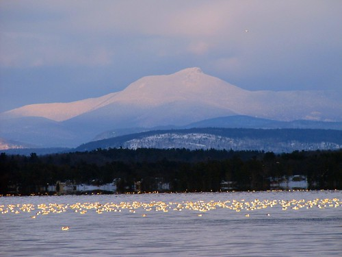 Camel's Hump with gulls 2