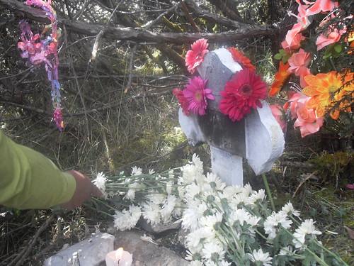 Flores Emialia