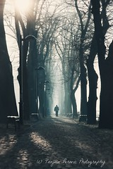 Back to Reality. Pirot, Serbia. Kej. Tanjica Perovic Photography. (Tanjica Perovic) Tags: trees treealley morning winter sun sunlight backlight benches lamps perspective vanishingpoint person walking solitary kej pirot кејнанишави пирот србија serbia light naturallight sunbeams bare branches atmospheric explored sigma1770mmf2845dcmacro pirotski srbija pirotskicilim pirotsrbija tanjicaperovic тањицаперовић photography pirotserbia pirotskikej pirotkej kejnanisavi nisava нишава tanjicaperovicphotography фотографија fotografija srpski српски fotograf фотограф photographer fotografijepirota floodbarrier barrieragainstflooding svetozarmisirlic quay floodingprotection platinumheartaward throughherlens