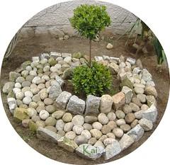 Árbol debajo del cual reposan las cenizas de Kai