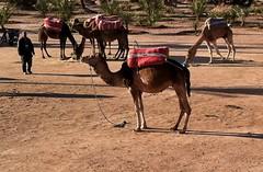 marrakech_170111_0347 (Ben Locke) Tags: