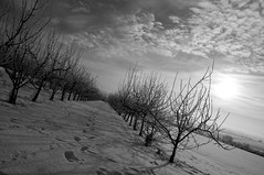 (Michad90) Tags: trees winter bw sun snow germany blackwhite nikon angle herrenberg d90