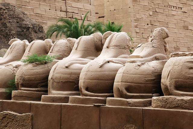 エジプト ルクソール カルナック神殿スフィンクスの後ろ姿