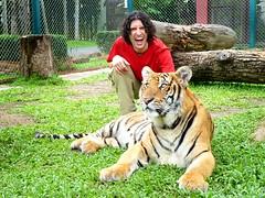 Lindo gatito 298/365 (Beatriz Pitarch) Tags: thailand tiger tailandia felino chiangmai thailandia tigre project365 tigerkingdom