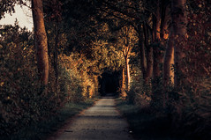 Into the unknow (lutzheidbrink) Tags: ngc nikon d5000 landscape autumn germany travelphotography travel walk path light shadow nature naturelover naturelovers tree trees mystery mist unknown