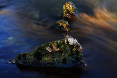 Stones  with leaves, river Wrm (Traveller_40) Tags: longexposure autumn sunset water rock stone closeup river munich mnchen flow rocks sonnenuntergang herbst 100mm steine bach leafs bltter stadtpark lowsun abendrot wrm pasing flus mnchenpasing