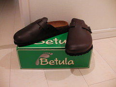betula rock