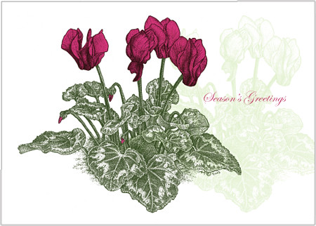 Christmas Cyclamen  5x7 greeting card