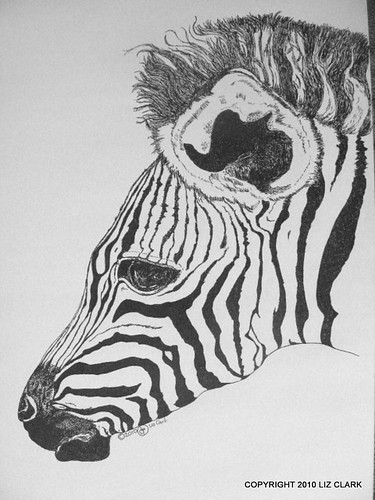 Zebra Foal - Pen & Ink Drawing