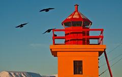 Lighthouseplay. (joningic) Tags: november winter sun lighthouse cold nature colors iceland ravens sunnyday eyjafjrur svalbarseyri hrafnar eyjafjararssla
