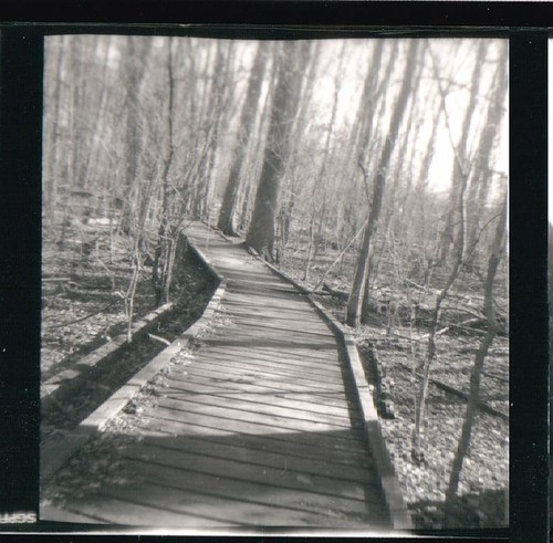 Crooked Forest-Ansco panda
