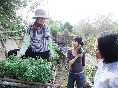秀琴家的菜園是婆婆的小天地, 84歲的婆婆爬上爬下地要跟我們分享她種下的各種蔬菜(相當可口),拍攝日期11月21日