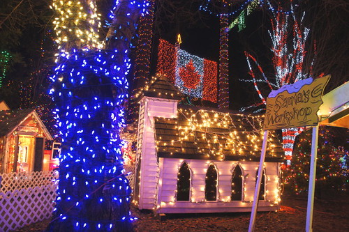 Bright Nights 2010 and Christmas Lights Illuminate Douglas Fir Rain Forest at Stanley Park in Vancouver