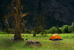 Wilderness... (M Atif Saeed) Tags: old camping trees pakistan light wild camp mountain mountains tree nature yellow trekking trek landscape natural jungle shade areas wilderness northern northernareas gilgit ghizer ishkoman karamber atifsaeed borogil gettyimagespakistanq1