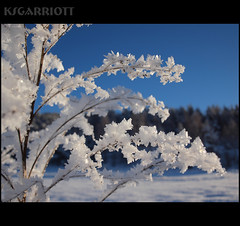 Frostesynthesis (KSGarriott) Tags: blue winter white snow cold ice nature forest outdoors frost crystals frosty olympus freeze vegitation ksgarriott e620 scottgarriott
