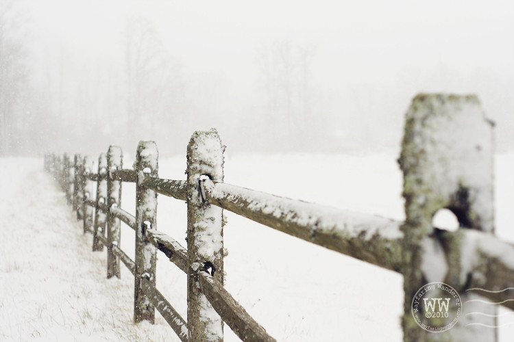 Wintry Fence