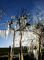 Ice (Buxtonwolf) Tags: road blue sky cold ice frozen freeze hedge icicle icicles