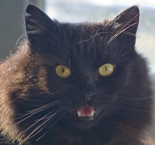 Lady Mew