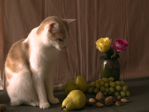 Arthur and Still Life