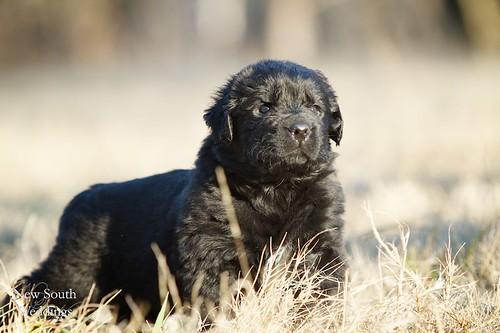 2010-12-23-Puppies56