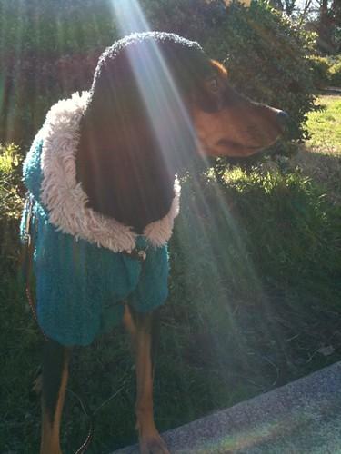 日を浴びる黒犬。