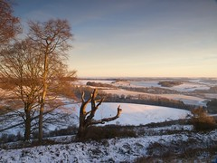 Boxing Day morning on Beacon Hill (Jon Sketchley) Tags: england snow boxingday hampshire meonvalley southdowns beaconhill