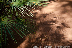 CH7_8902 ( chcfoto.wordpress ) Tags: northafrica morroco morocco marrakech chrischongphotography2010nikond300marrakechmoroccodecemb chrischongphotography2010nikond300marrakechmoroccodecember maerakesh